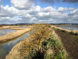 Coastal habitat in Southern England